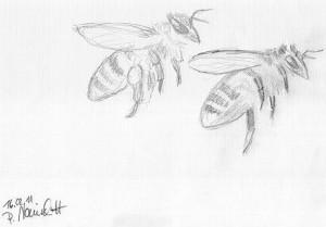 Bienen Web Format